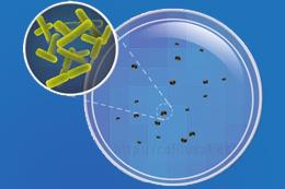 Cursos online de microbiologia